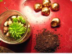Cały zestaw: roślinki, muszelki, ziemia