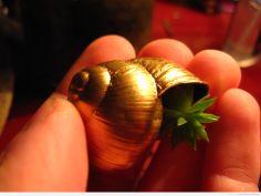 Miniaturka w muszelce