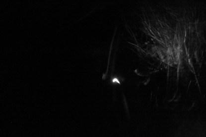 woods30