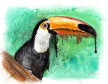 toucan_by_lukefielding-d6tcth8