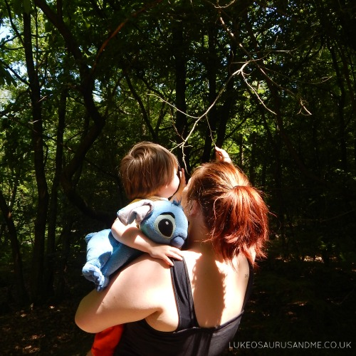 Alice Holt in Surrey. A lovely woodland walk from lukeosaurusandme.co.uk