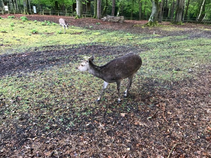 New Forest Wildlife Park Day Out Review at https://lukeosaurusandme.co.uk