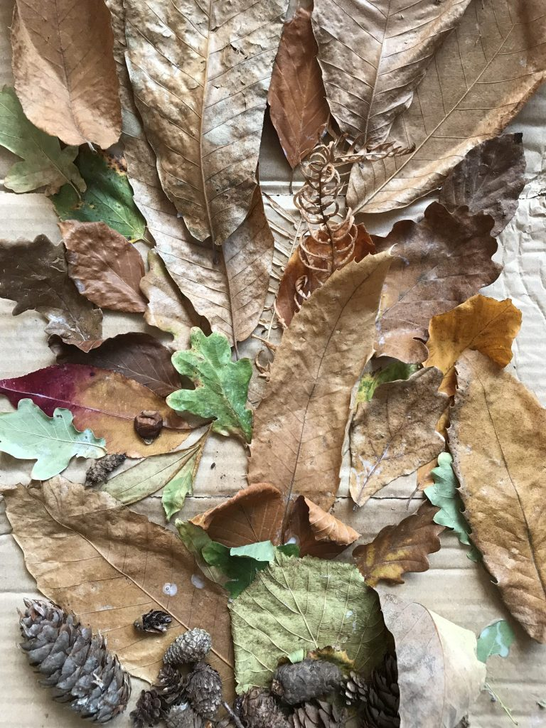 Autumn Nature Collage at https://lukeosaurusandme.co.uk
