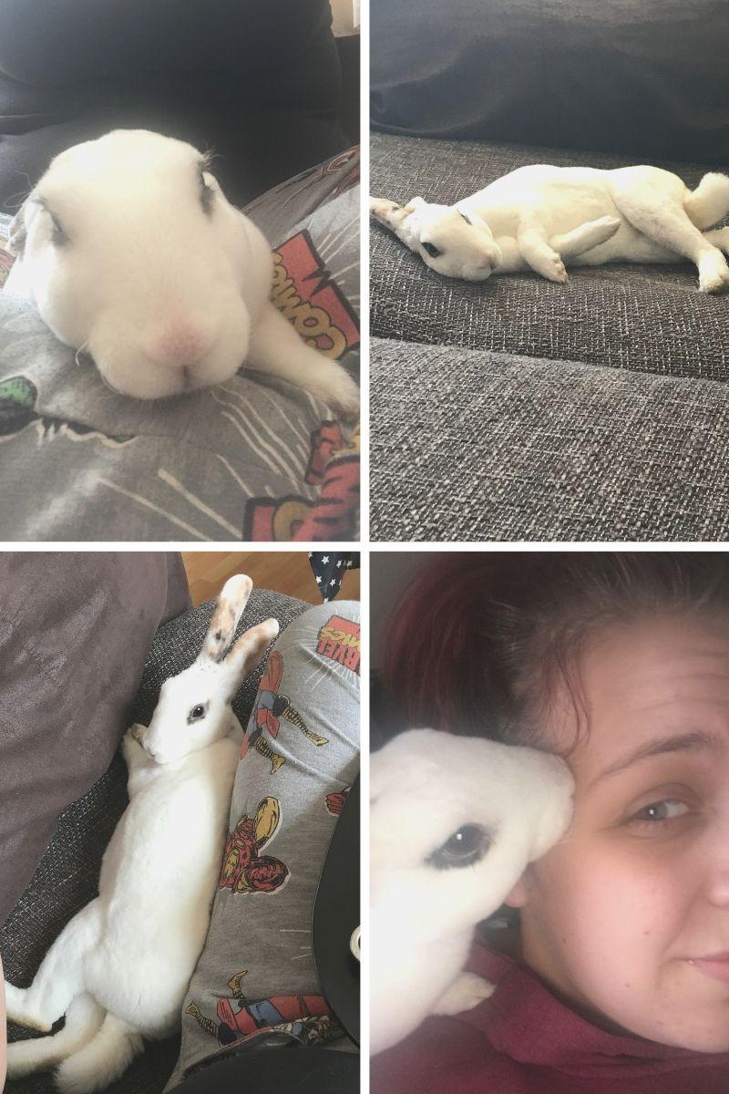 Huxley the house bunny - a white standard Rex. https://lukeosaurusandme.co.uk