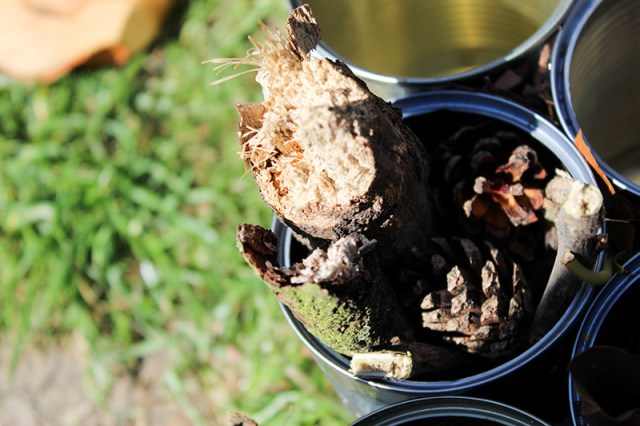 A close up of a recycled tin can stuffed with dead wood, twigs and pinecones for a blog post about building a bug hotel.