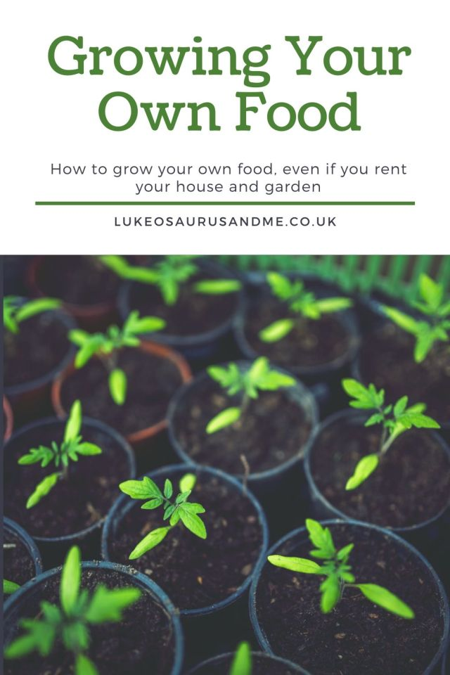 Image of saplings and text that reads 'growing your own food - how to grow your own food, even if you rent your house and garden.