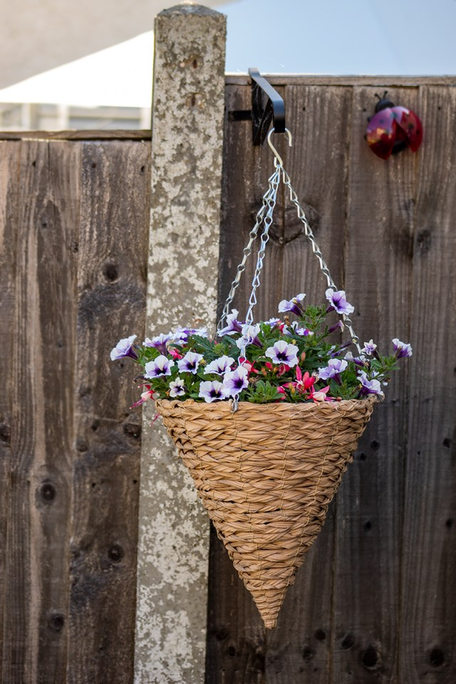 A hanging basket filled with white and purple flowers hanging on a fence. For a post on making your rented garden look beautiful.