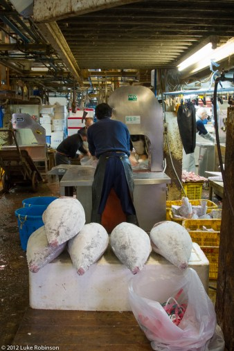 Frozen tuna waiting to be sawn apart, Tsukiji Fish Market