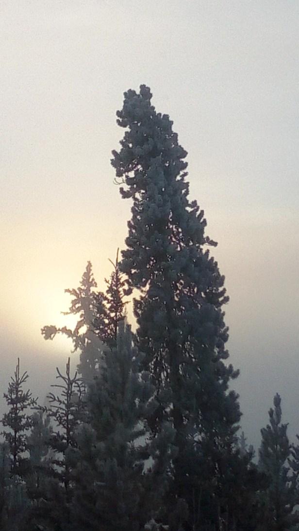 Die Sonne scheint golden hinter zwei Bäumen.