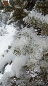 Bei -20 Grad und weniger fällt der Schnee wie im Schaufenster. Jede Schneeflocke ist perfekt.