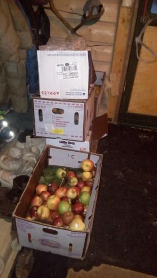 Kistenweise Obst und Gemüse stapelt sich im Flur.