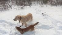 Kabel-Kito moechte mit dem groesseren Buddy im Schnee spielen und schleicht um ihn herum.