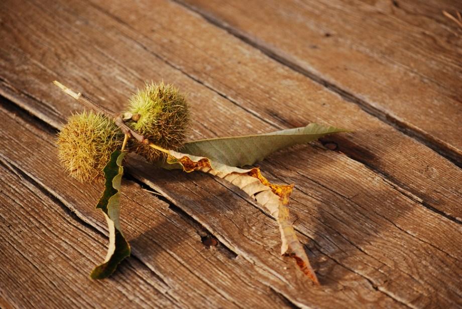 autumn.thorns.001
