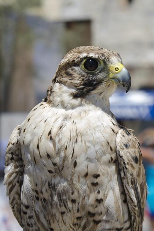 malta.bird001