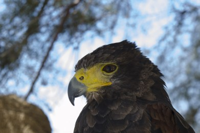 malta.bird004