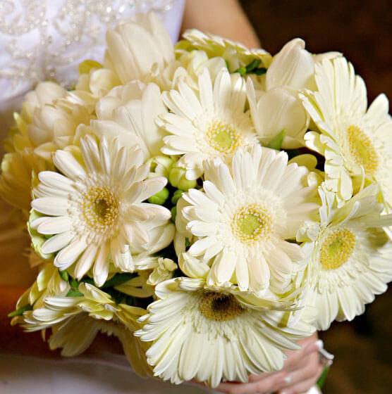 Герберы - позитивные цветы для позитивных невест