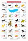jual poster pendidikan islam hewan-dalam-al-quran