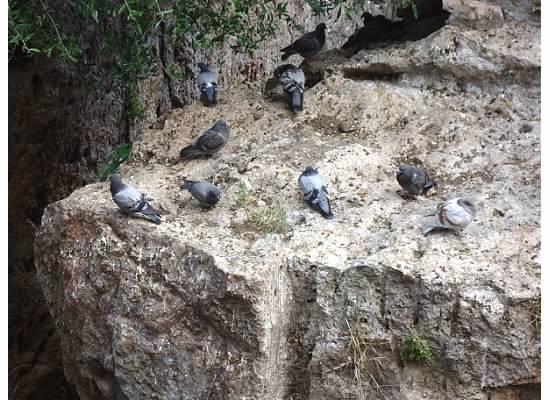 Inside Pigeons