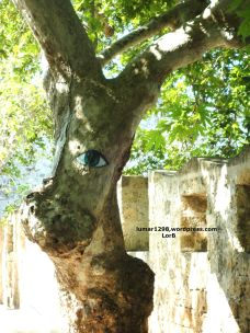 Dog's Tree Face