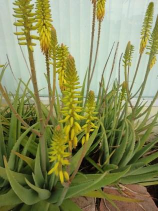 Yellow Flower (2)
