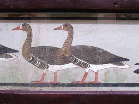 08_meidum_geese