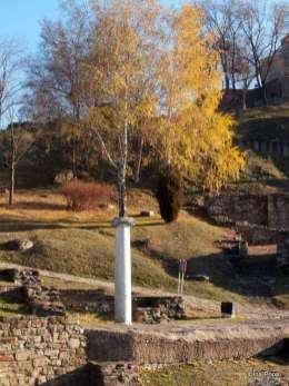 Veliko Tarnovo - un copac