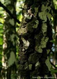 Texturi de pădure