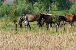 caii-lupilor-9185