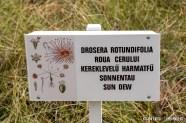 Plante din Tinovul Mohoș