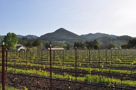 000001912-landmark_vineyard