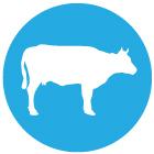 icon_cow2