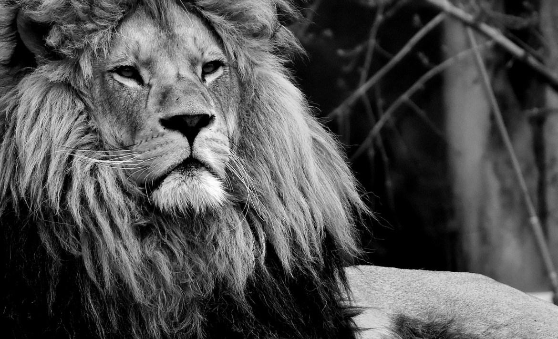 для Львов