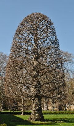 the elms front lawn tree