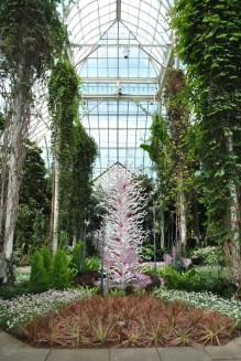 NYBG Chihuly back in conservatory pink