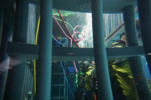Cage dive Point Defiance Zoo & Aquarium