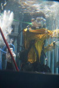 Point Defiance Zoo & Aquarium cage diving in drysuit