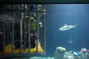 Shark Cage Dive Tacoma, WA