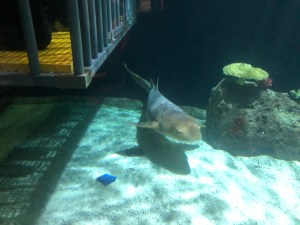 sharks at Point Defiance Zoo & Aquarium