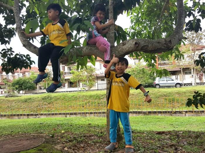 panjat pokok
