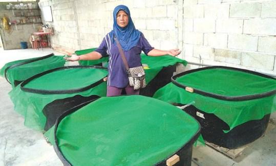 Pembekal Minyak Lintah Malaysia