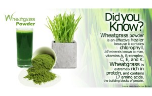 wheat_grass_powder_nutrition-808x511