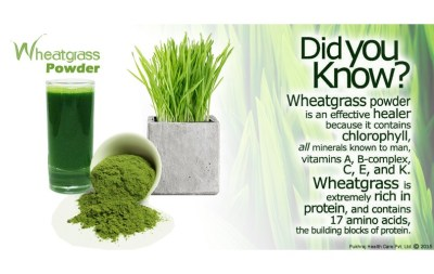 wheat_grass_powder_nutrition-808x511.jpg