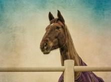 horse-02-08-1