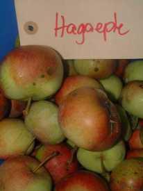 Hagaeple