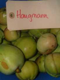 Haugmann