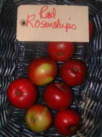Rød rosenstrips
