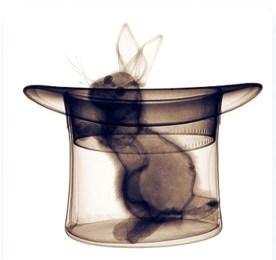 Rabbit_HughTurvey