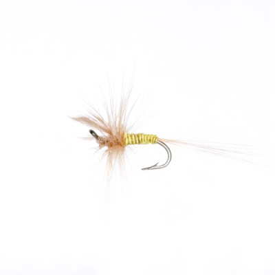 Yellow Boy, Winged