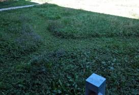 L'erba tagliata a isole nello spazio sgambatura cani