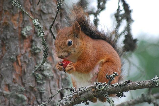kuva_orava03